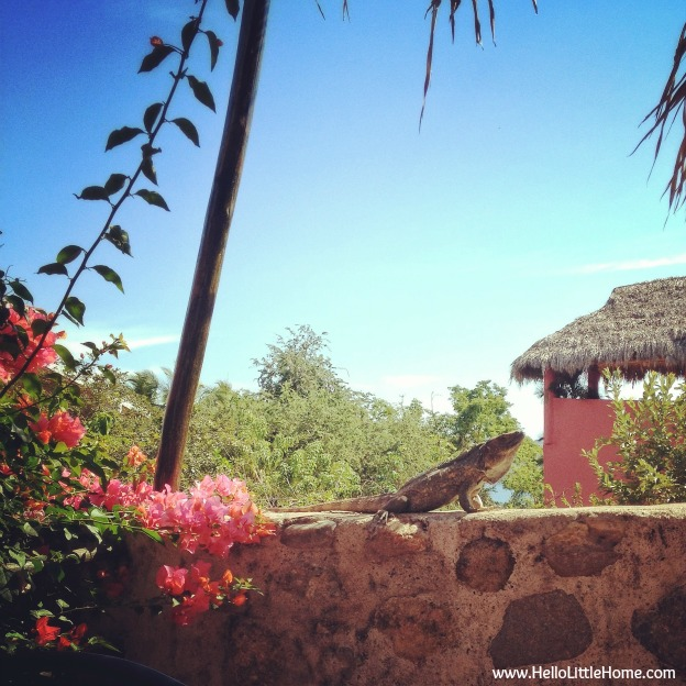 Our neighbor at Casa Monarca in Chacala, Mexico - www.HelloLittleHome.com
