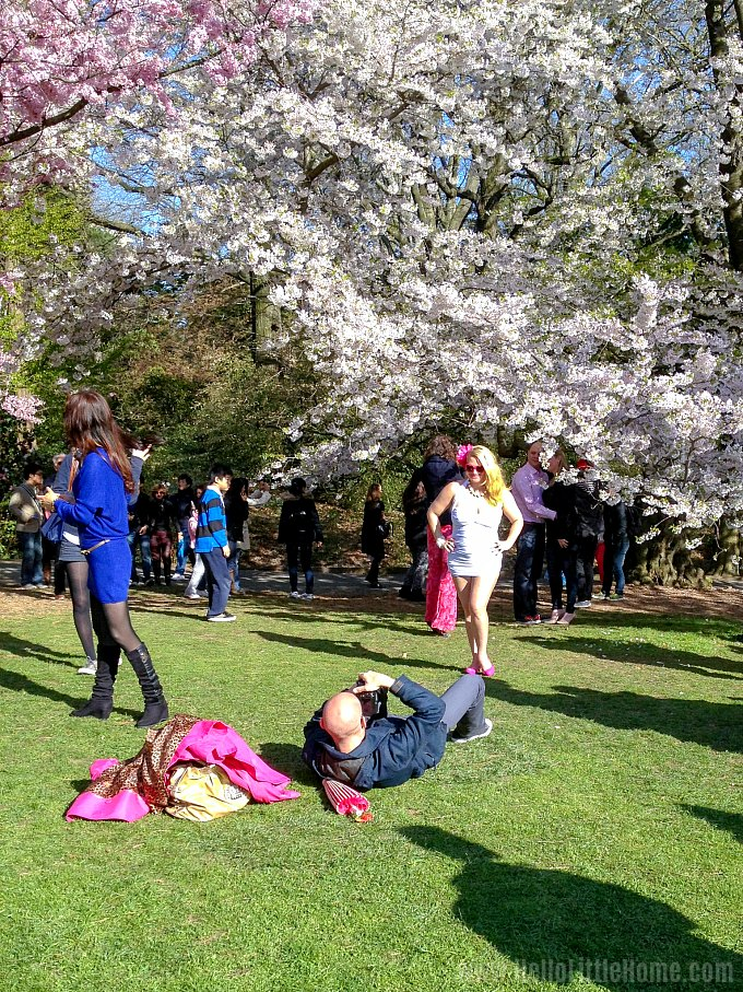 Cherry Blossoms at the Brooklyn Botanic Garden Cherry Blossom Festival.