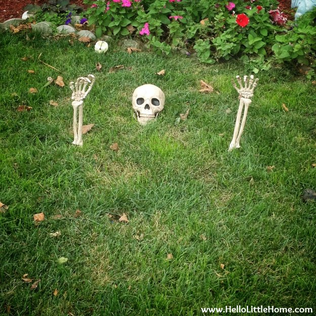 Skeleton Near Rockaway Beach