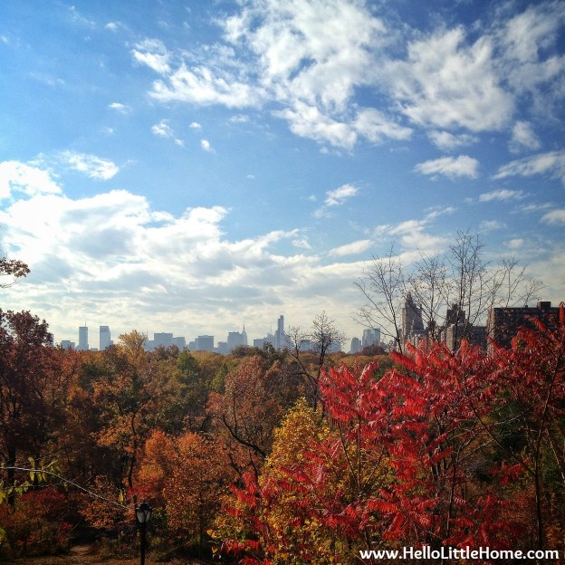Treetop view of New York in Central Park with Fall Colors.