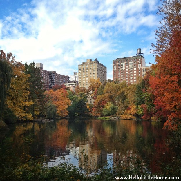 Fall colors around the Central Park Pool