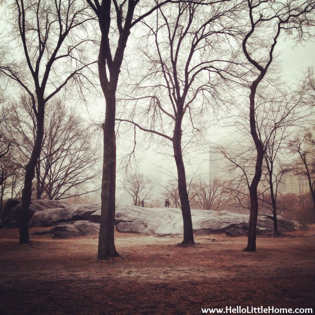 Foggy Central Park | Hello Little Home