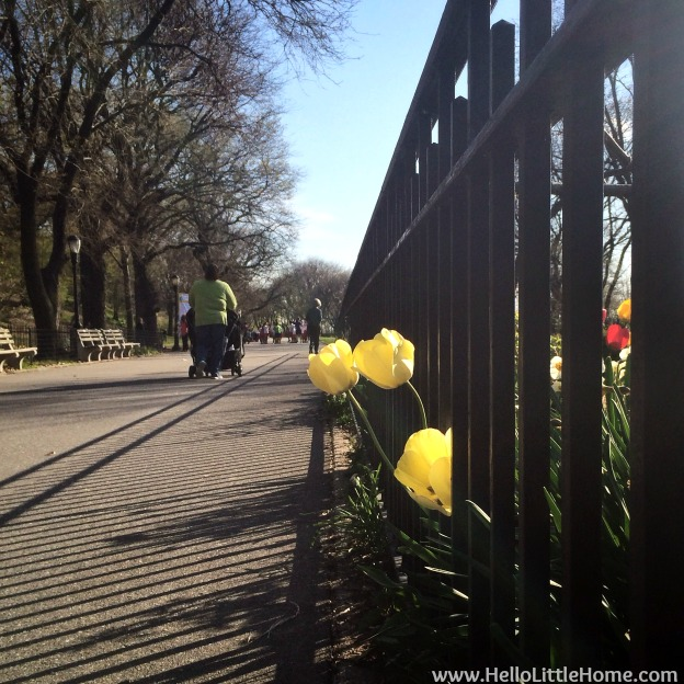 Yellow Tulips in Riverside Park NYC | Hello Little Home