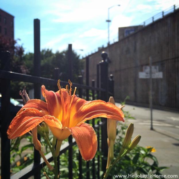 Pretty Lily | Hello Little Home