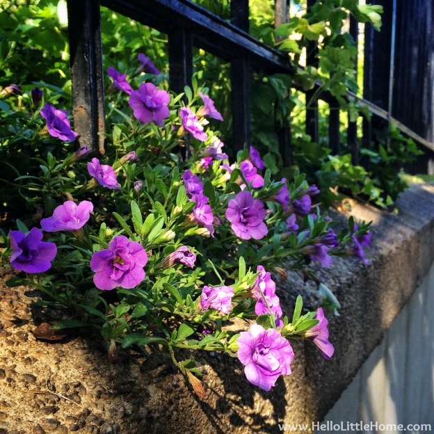 Purple Flowers in Brooklyn | Hello Little Home