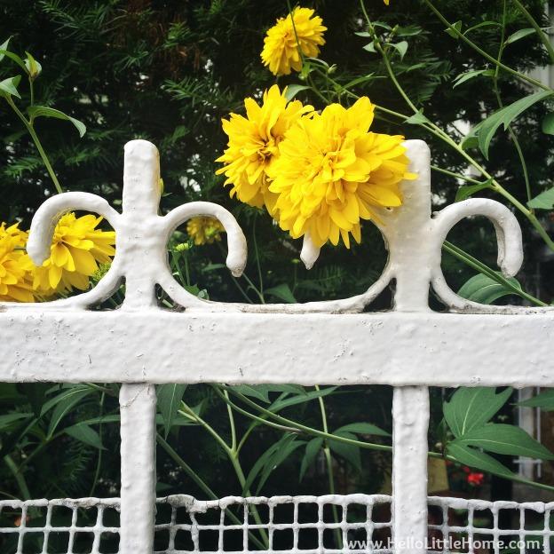 Flowers in Brooklyn | Hello Little Home