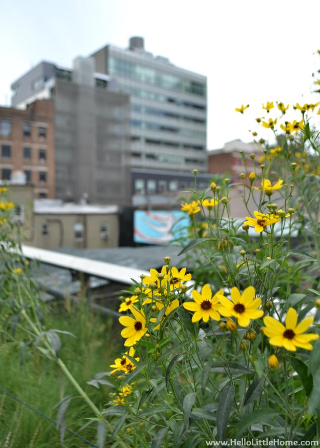 Explore NYC with Me: The High Line - Flowers | Hello Little Home