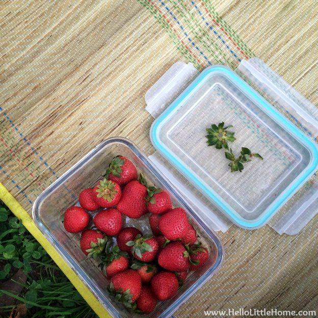 Picnic with Strawberries | Hello Little Home