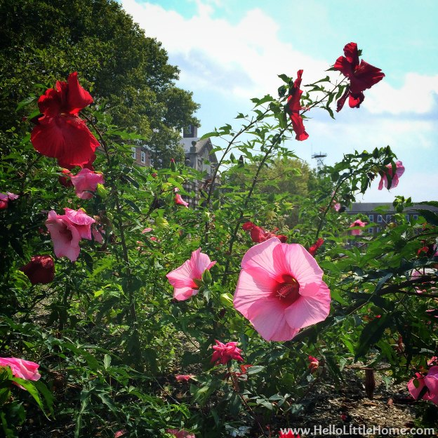 Giant Flowers on Governors Island | Hello Little Home