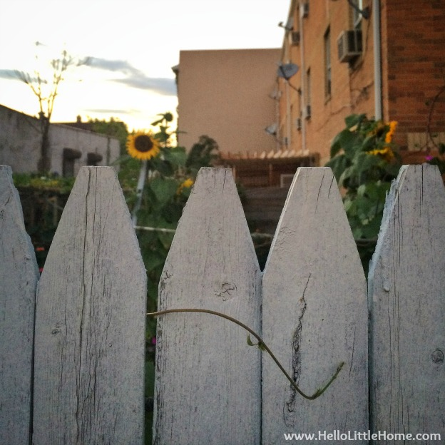 White Picket Fence | Hello Little Home
