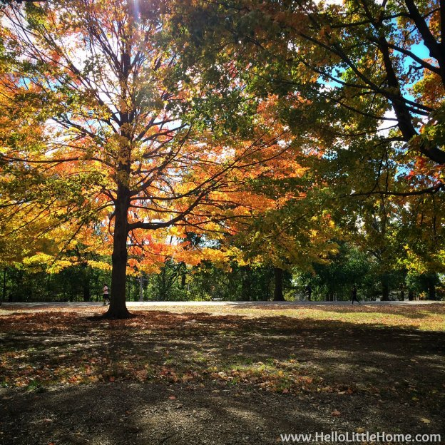 Fall Color in Prospect Park | Hello Little Home