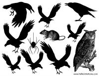 """The Raven"" Animals Printable"