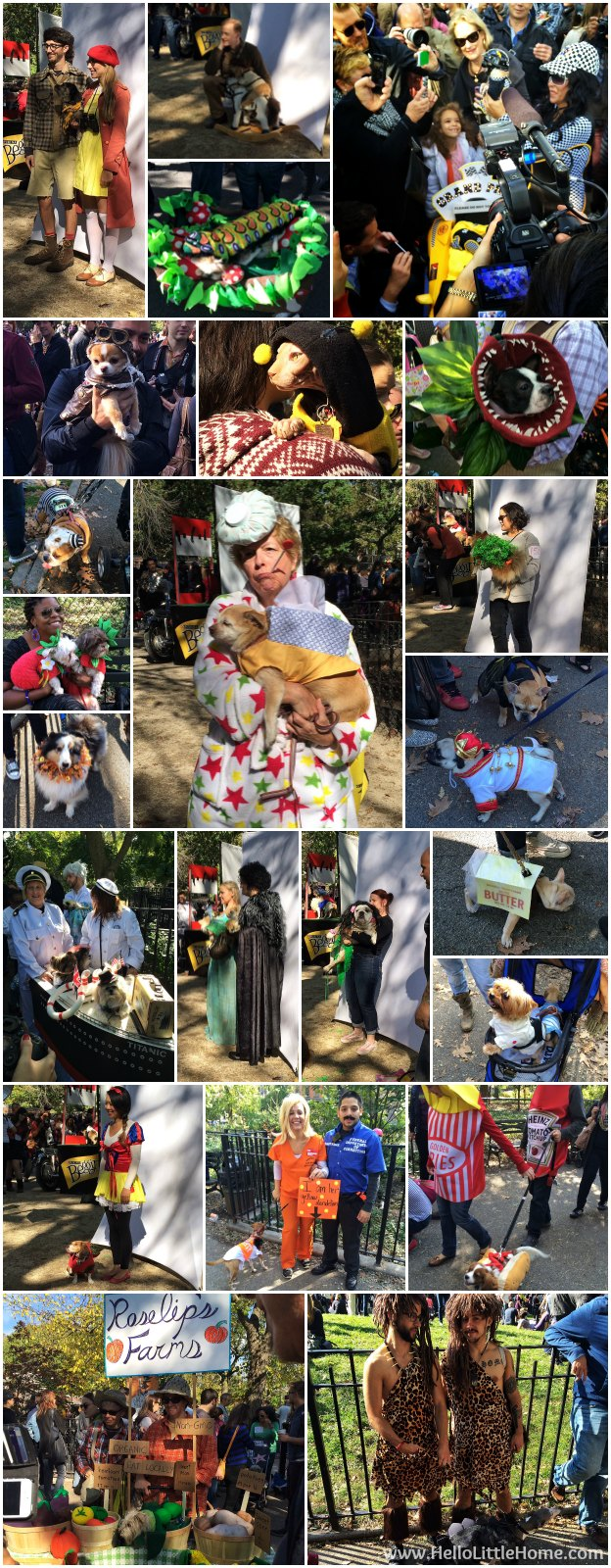 Tompkins Square Halloween Dog Parade | Hello Little Home