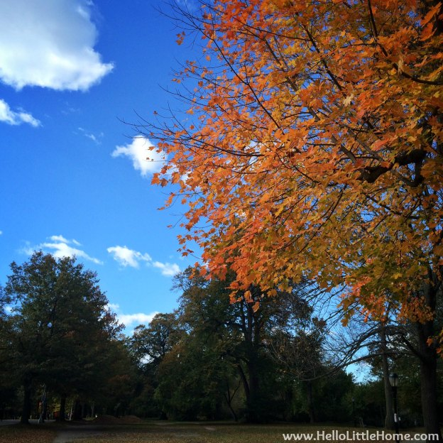 Fall Colors in Prospect Park | Hello Little Home