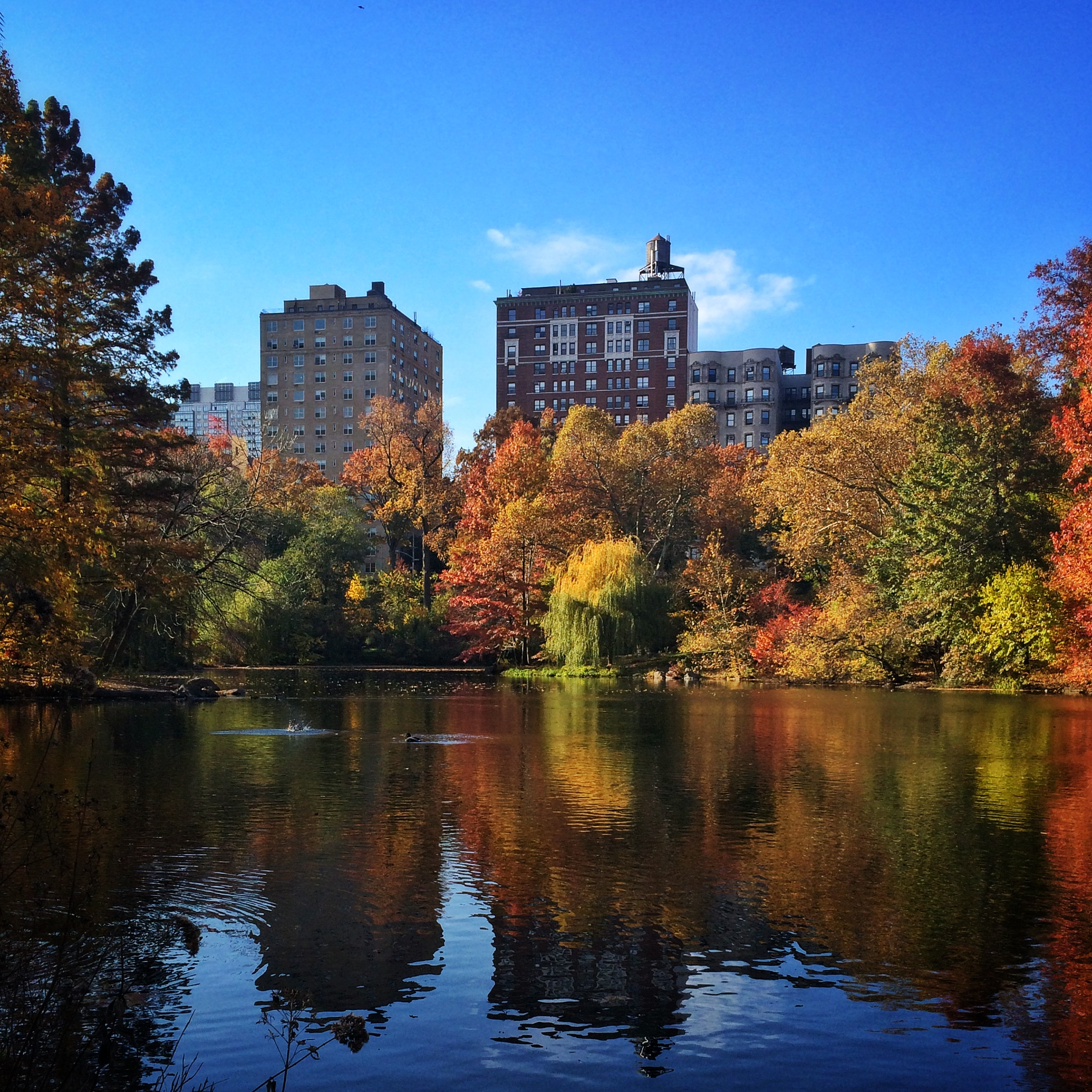 Fall Leaves in Central Park | Hello Little Home
