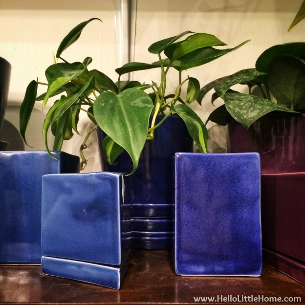 Blue Potted Plants at The Sill | Hello Little Home