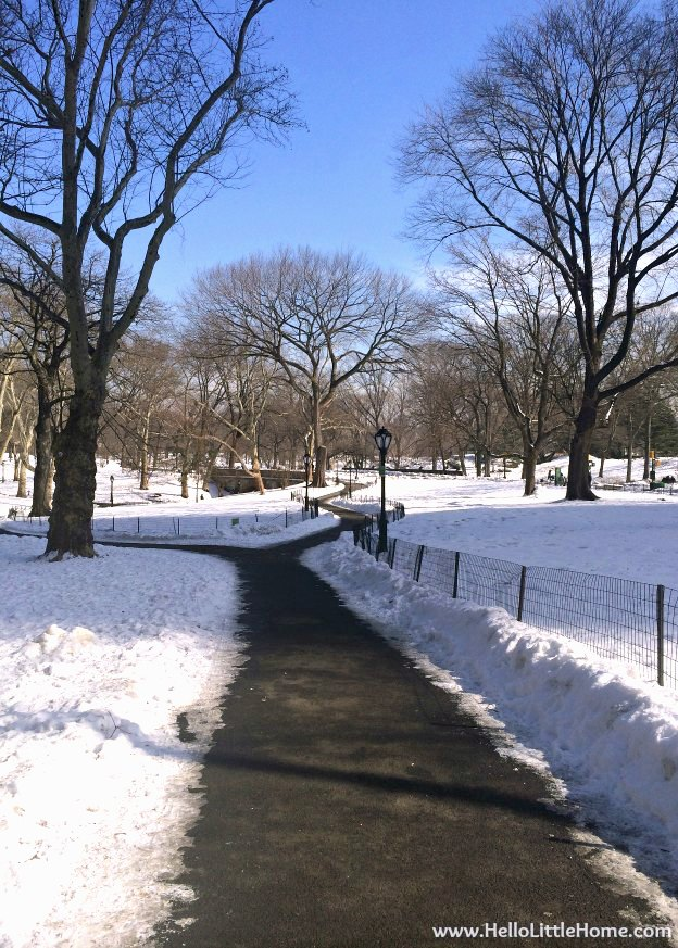A snow lined path in Central Park.