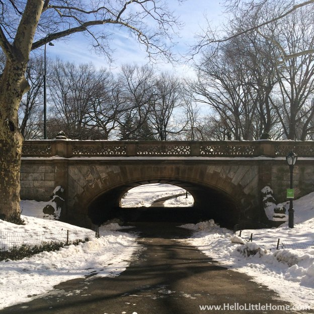 Affinity At Winter Park Home: Experience Winter In Central Park