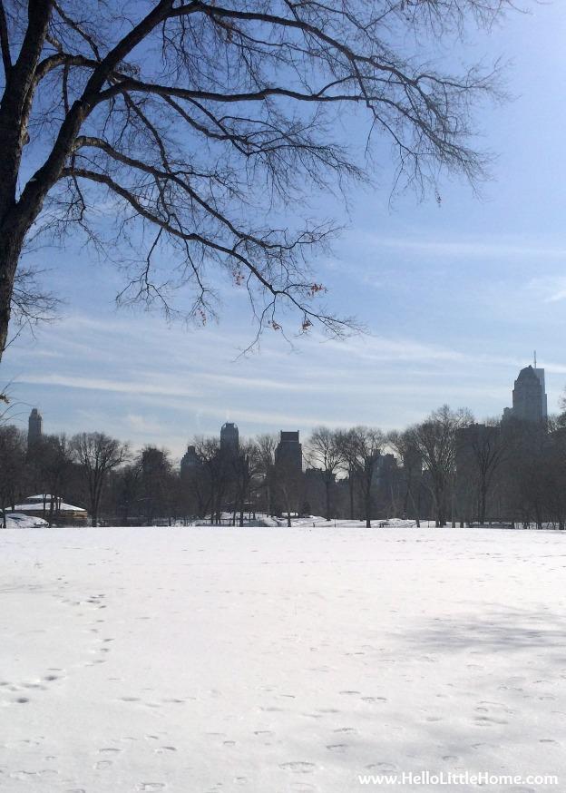 Winter Walk in Central Park | Hello Little Home