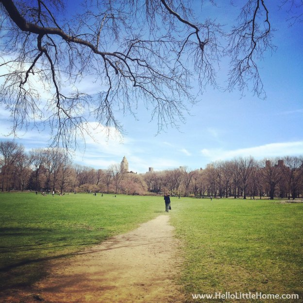 Sheep's Meadow in Central Park | Hello Little Home