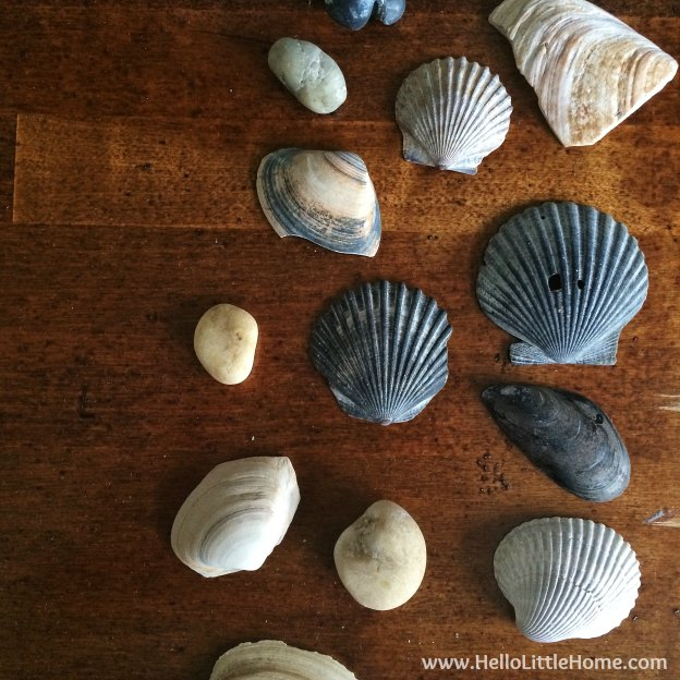 Shell Collection | Hello Little Home