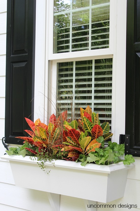 DIY Fall Decorating Ideas: Window Box Spruce Up from Uncommon Designs | Hello Little Home