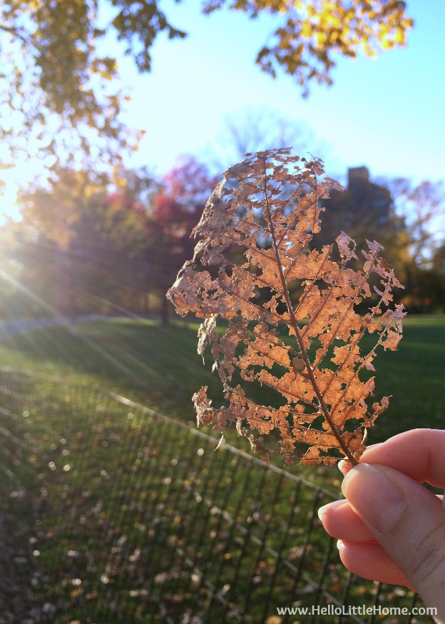 A hand holding a leaf skeleton in the park.
