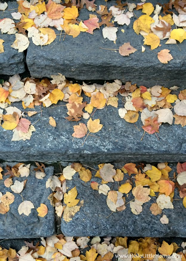 Stone Stairs Covered in Colorful Leaves | A Guide to Central Park in Fall (in Pictures)! Take a walking tour of NYC's Central Park in autumn ... the fall colors are bucket list worthy! This iconic US park is a top travel destination in Manhattan and autumn is the perfect time to visit. | Hello Little Home