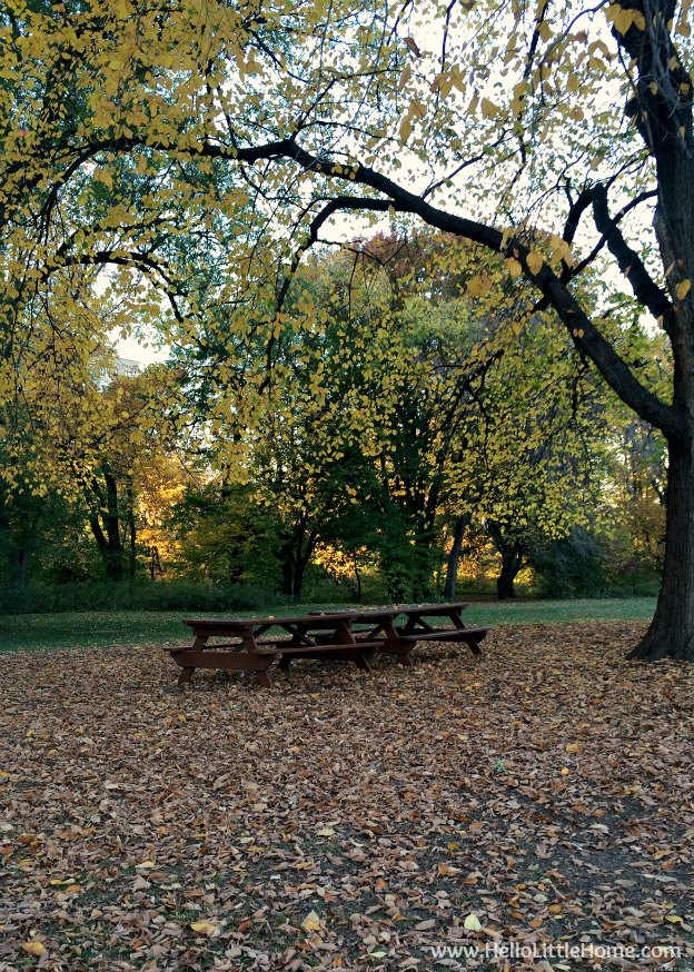Picnic Tables Surrounded by Fall Leaves | A Guide to Central Park in Fall (in Pictures)! Take a walking tour of NYC's Central Park in autumn ... the fall colors are bucket list worthy! This iconic US park is a top travel destination in Manhattan and autumn is the perfect time to visit. | Hello Little Home