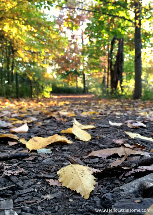 Path on the Great Hill | Guide to Central Park in Fall (in Pictures)! Take a walking tour of NYC's Central Park in autumn ... the fall colors are bucket list worthy! This iconic US park is a top travel destination in Manhattan and autumn is the perfect time to visit. | Hello Little Home