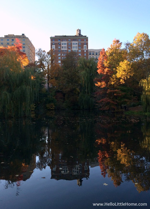 Buildings reflected in The Pool, part of a Guide to Central Park in Fall (in Pictures)! Take a walking tour of NYC's Central Park in autumn ... the fall colors are bucket list worthy! This iconic US park is a top travel destination in Manhattan and autumn is the perfect time to visit. | Hello Little Home