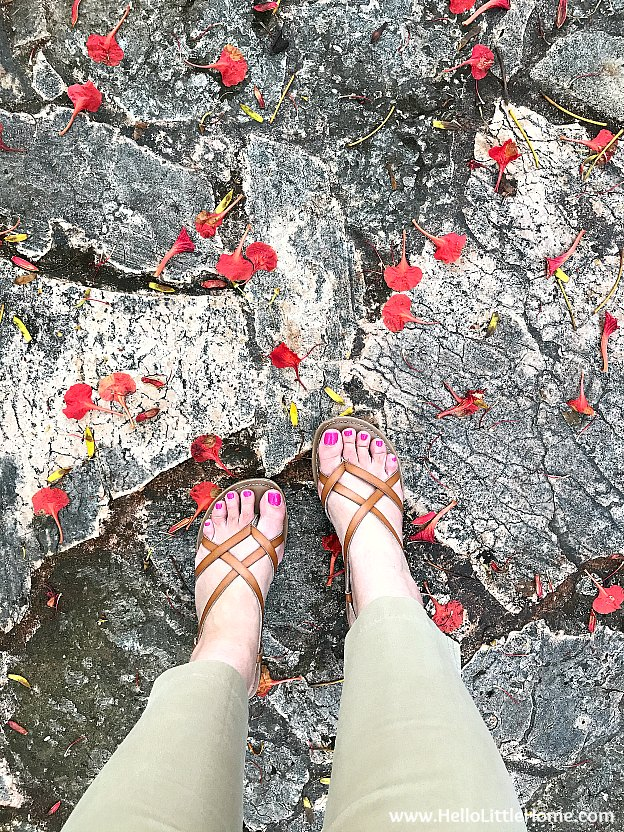 Standing on a flower strewn path in the outdoor garden.
