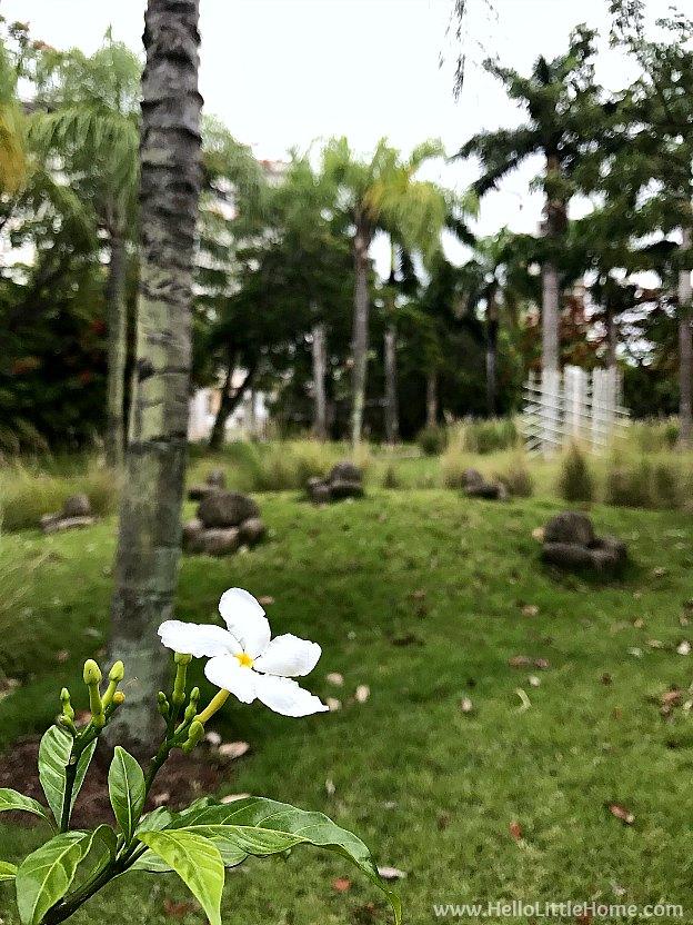 48 Hours in San Juan, Puerto Rico: Sculpture Botanical Garden at Museo de Arte de Puerto Rico   Hello LIttle Home