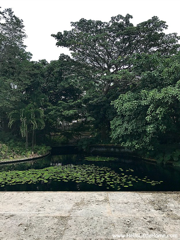 A Beautiful Pond in the Sculpture Botanical Garden at Museo de Arte de Puerto Rico