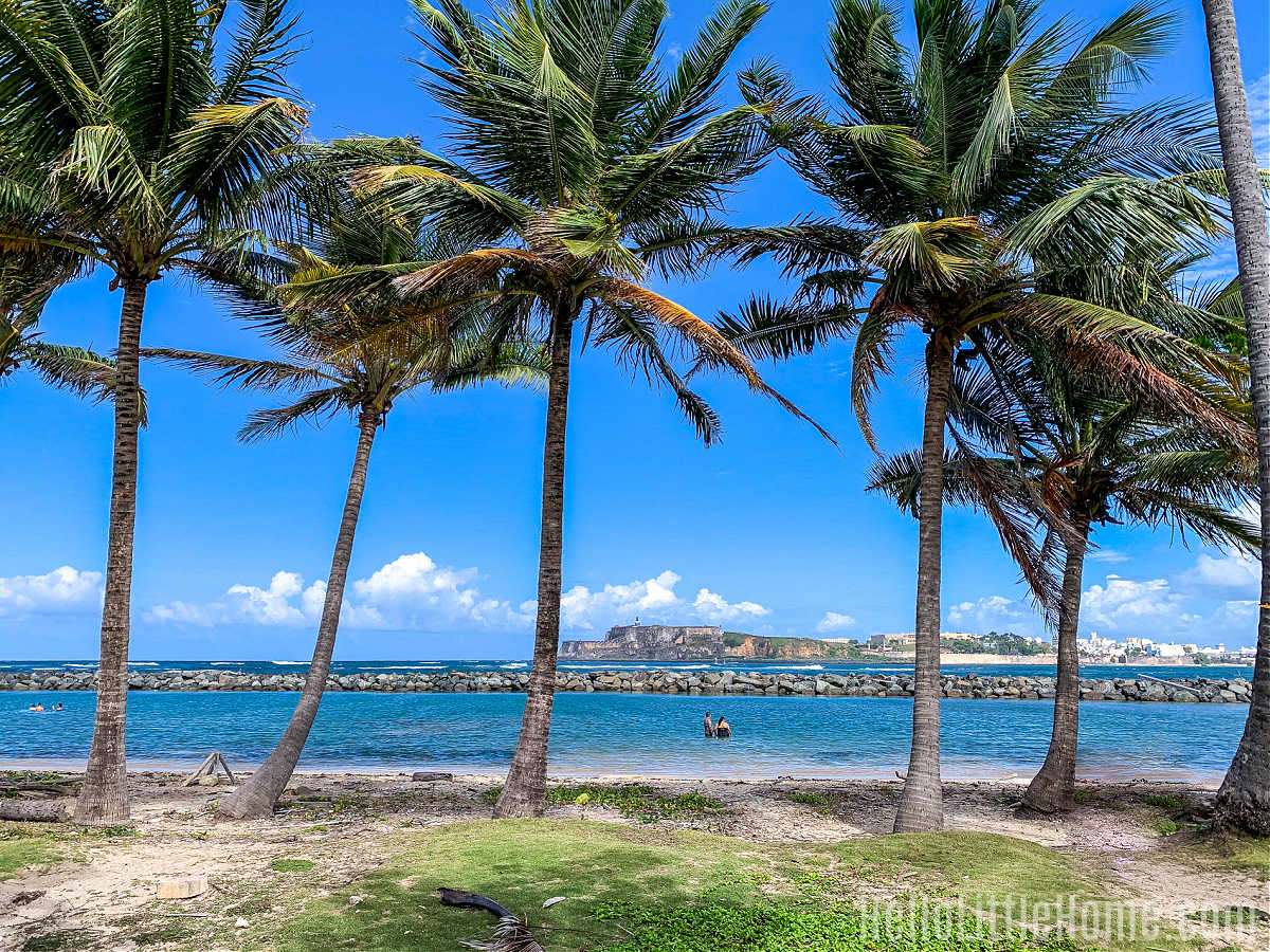 A row of palm trees near El Cañuelo with a view of El Morro in the distance.
