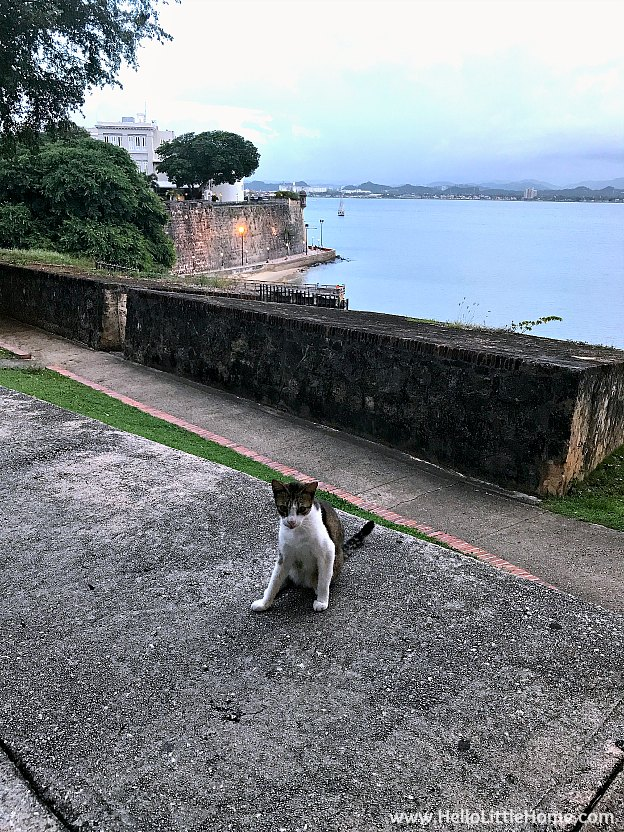 Stray Cat in Old San Juan | Hello Little Home