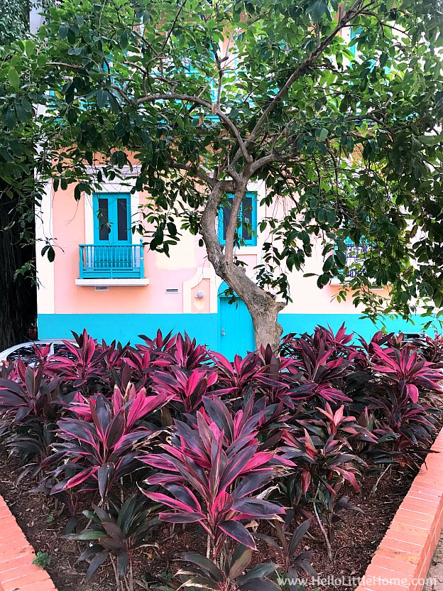 Colorful plants and buildings by Plaza along Calle Del Cristo in Old San Juan | Hello Little Home