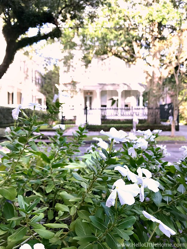 .Beautiful flowers with Garden District houses in the background