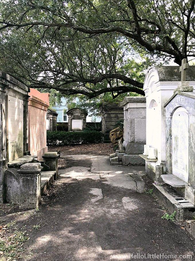 Beautiful Corner in Layfayette Cemetery No. 1 Shaded by a Huge Oak Tree