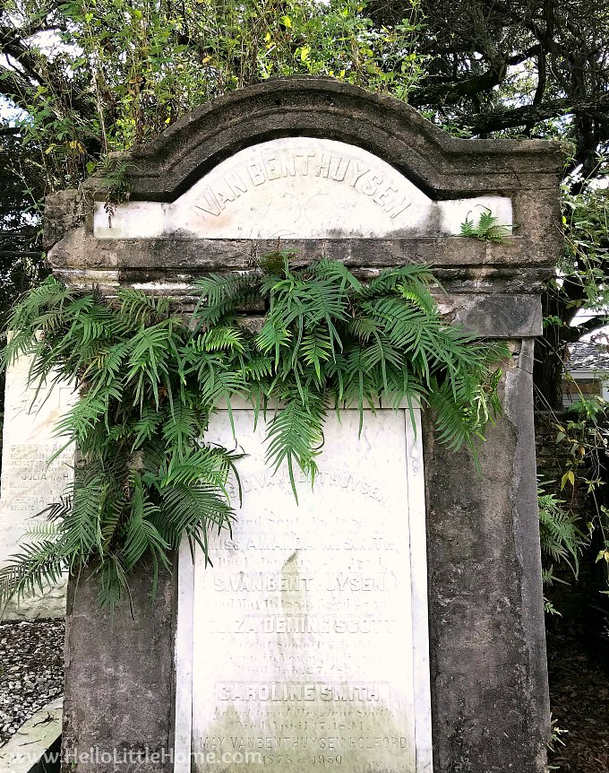 Plants Growing Out of a Family Vault in Lafayette Cemetery No. 1