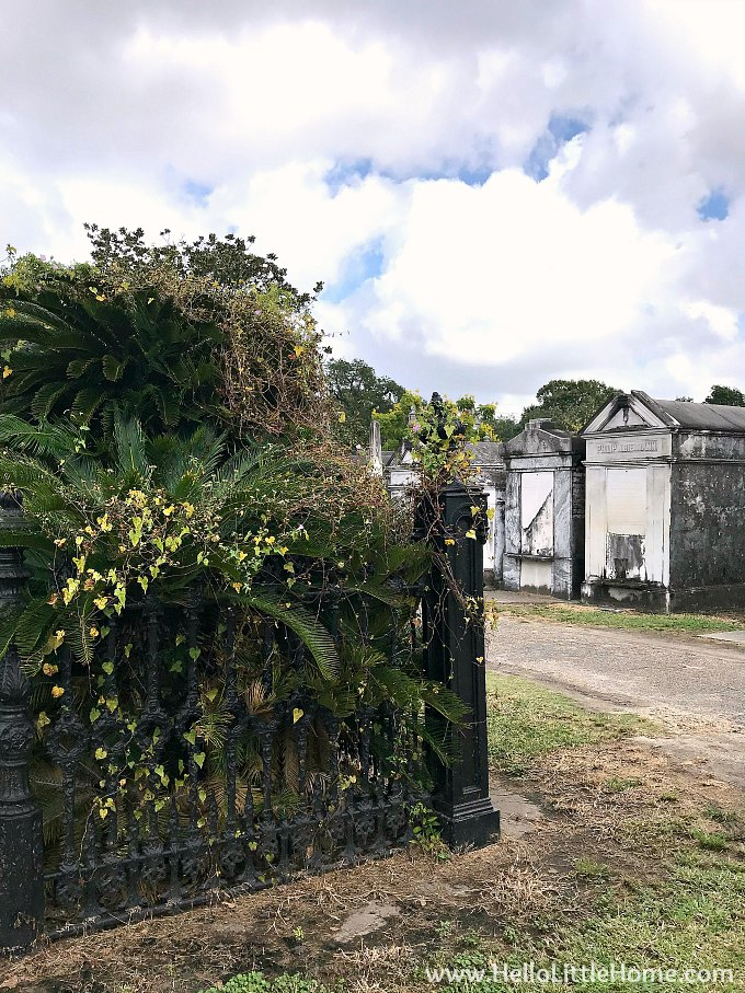 Lush Greenery and Cast Iron Fence in Lafayette Cemetery No. 1