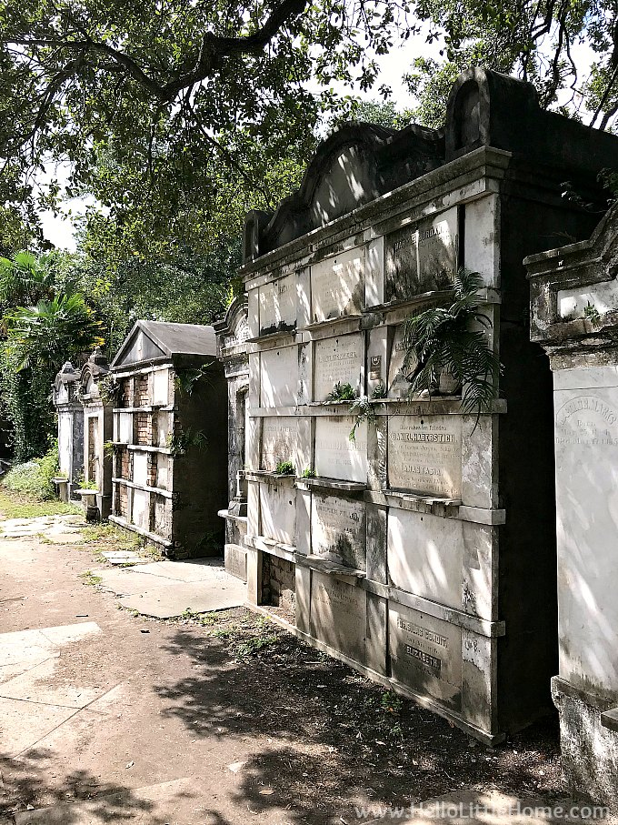 Tombs lining a Wall in the Lafayette Cemetery New Orleans