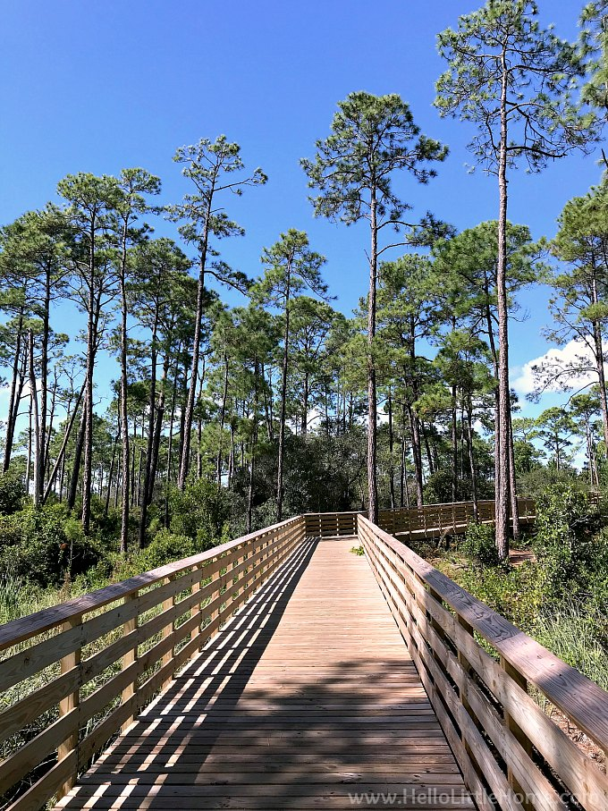 A fun Orange Beach attraction: riding the Hugh S Branyon Trail through pine trees.