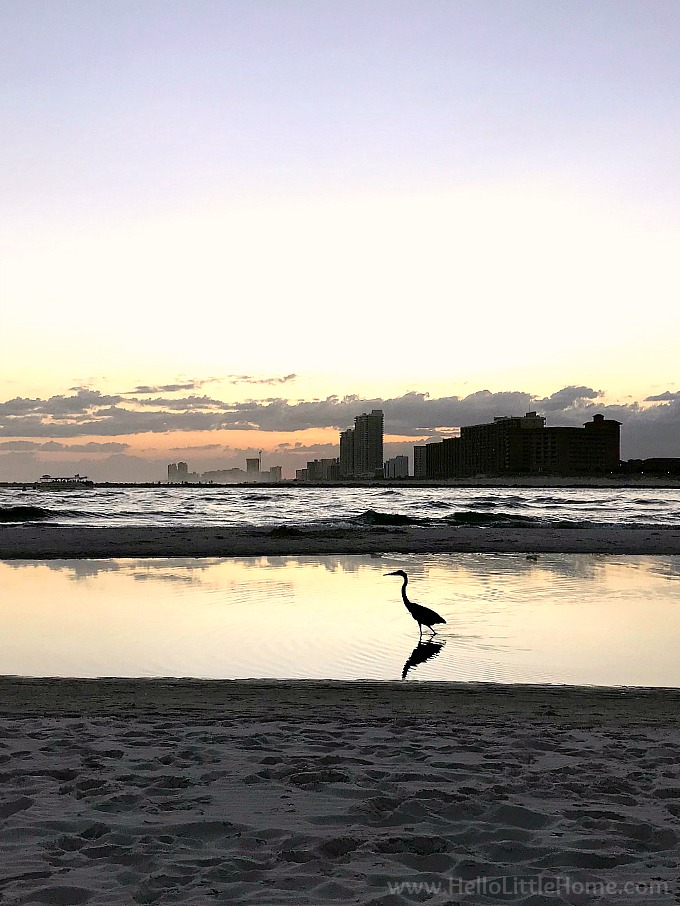 A heron in the water at Gulf State Park on Florida Point, overlooking Perdido Pass.