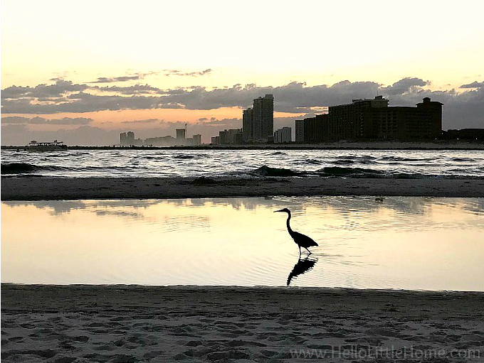 A heron or egret in the water at Perdido Pass Beach in Orange Beach, Alabama.