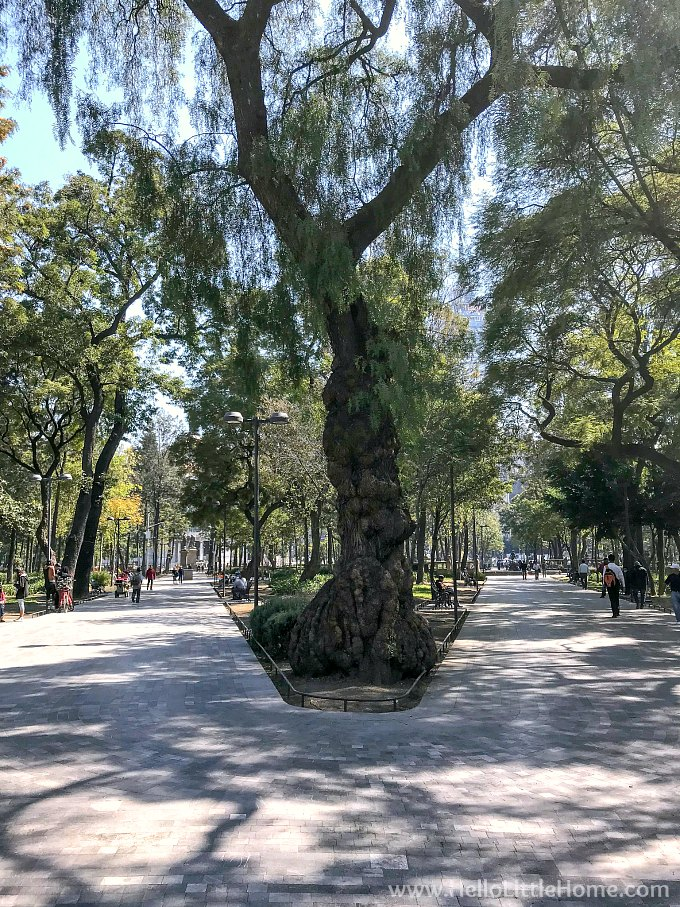 Tree lined pathways in Alameda Central in Mexico City's Historic Center.