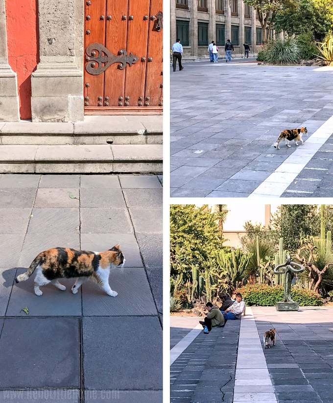 A stray cat in the garden of Mexico City's National Palace.
