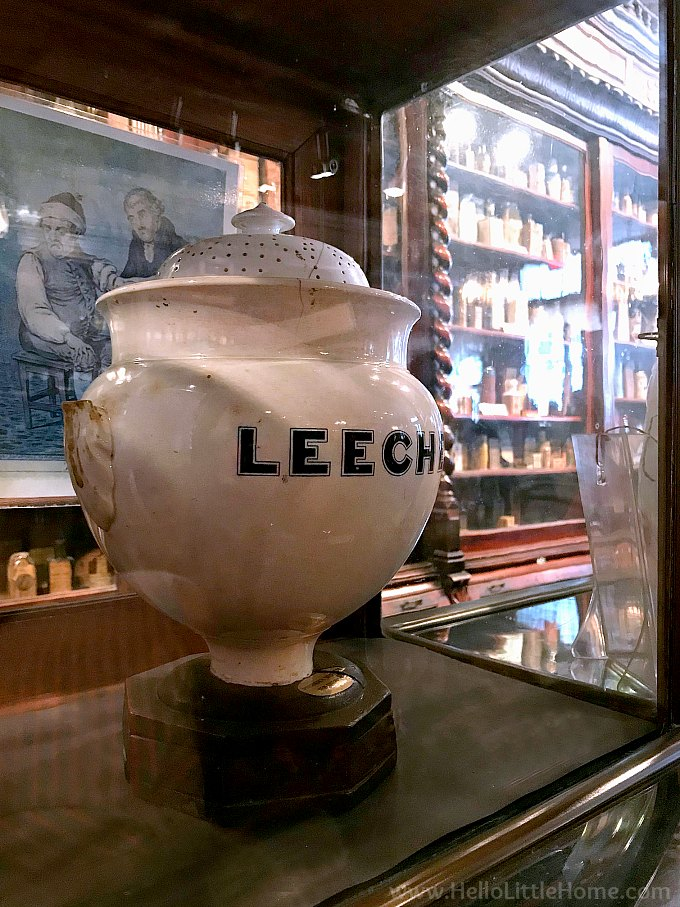 A Jar of Leeches at the Pharmacy Museum in the NOLA's French Quarter