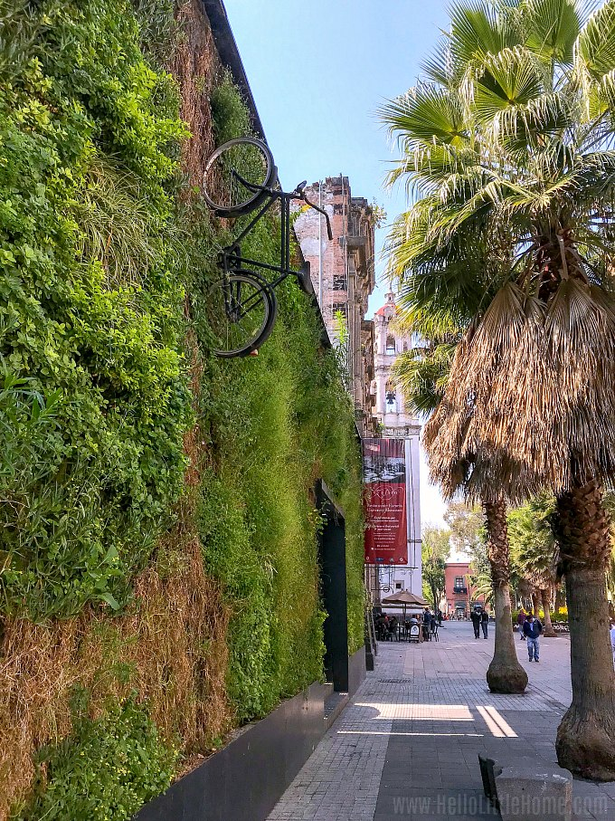 A vertical garden (jardin vertical) on Calle Regina in Mexico City.