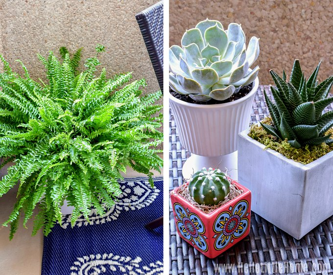 Decorating a small patio with plants.